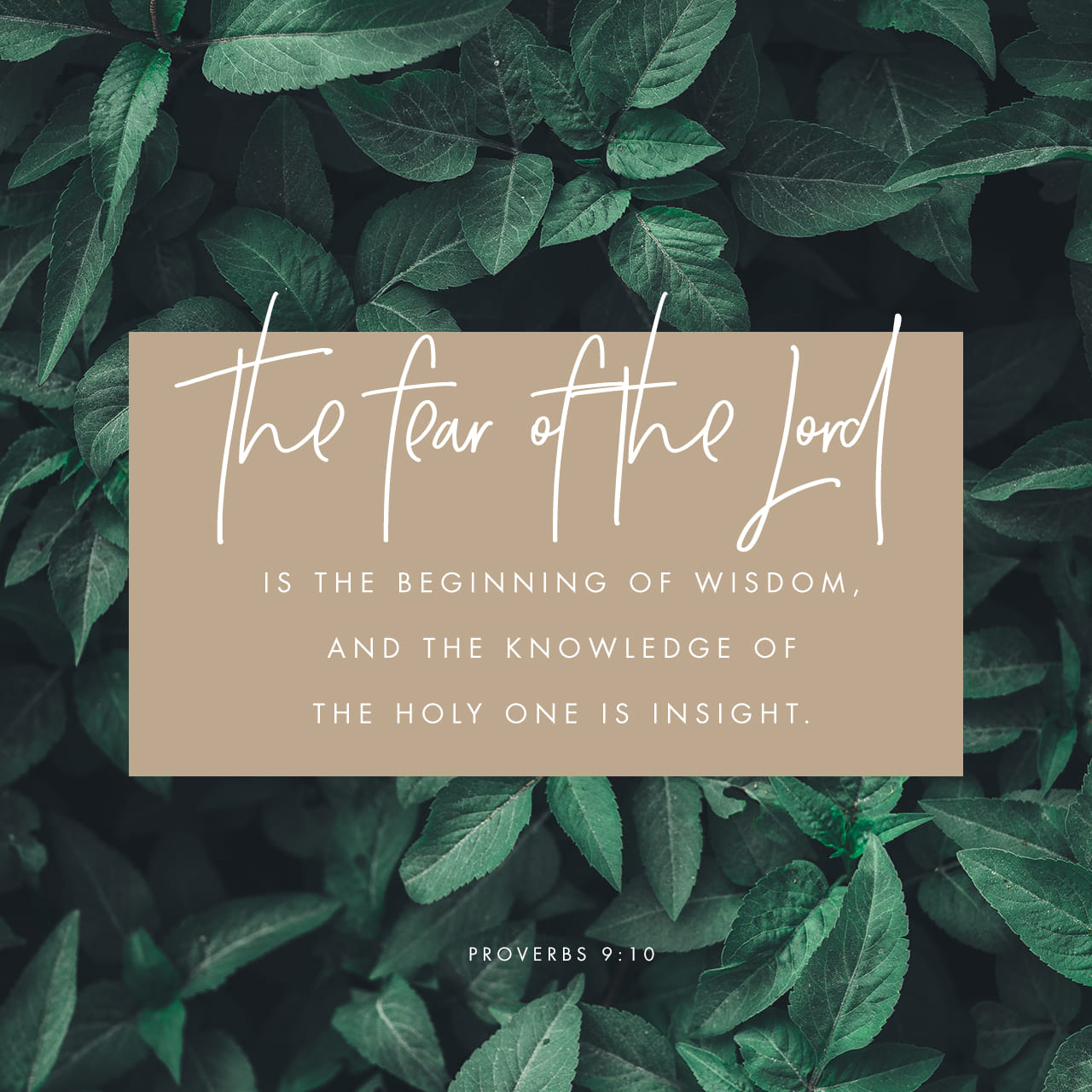 Proverbs 9:10 The fear of the LORD is the beginning of wisdom, and knowledge of the Holy One is understanding. | New International Version (NIV)