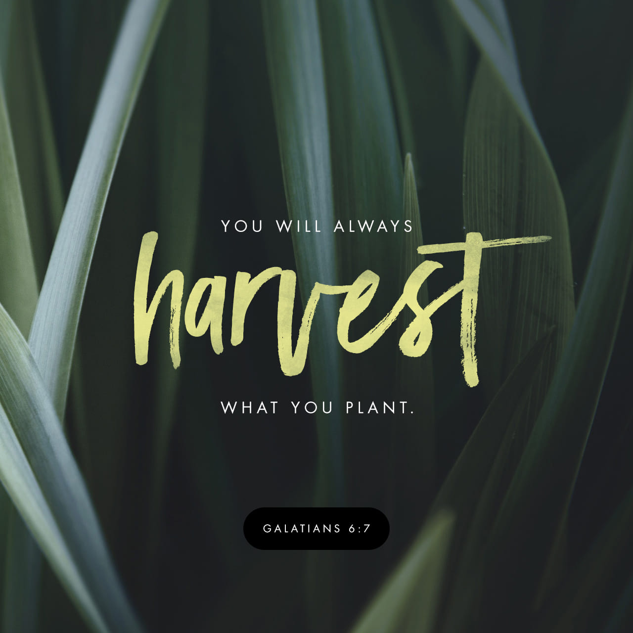 Galatians 6:7-8 Do not be deceived: God cannot be mocked. A man reaps what he sows. Whoever sows to please their flesh, from the flesh will reap destruction; whoever sows to please the Spirit, from the Spirit will re | New International Version (NIV)