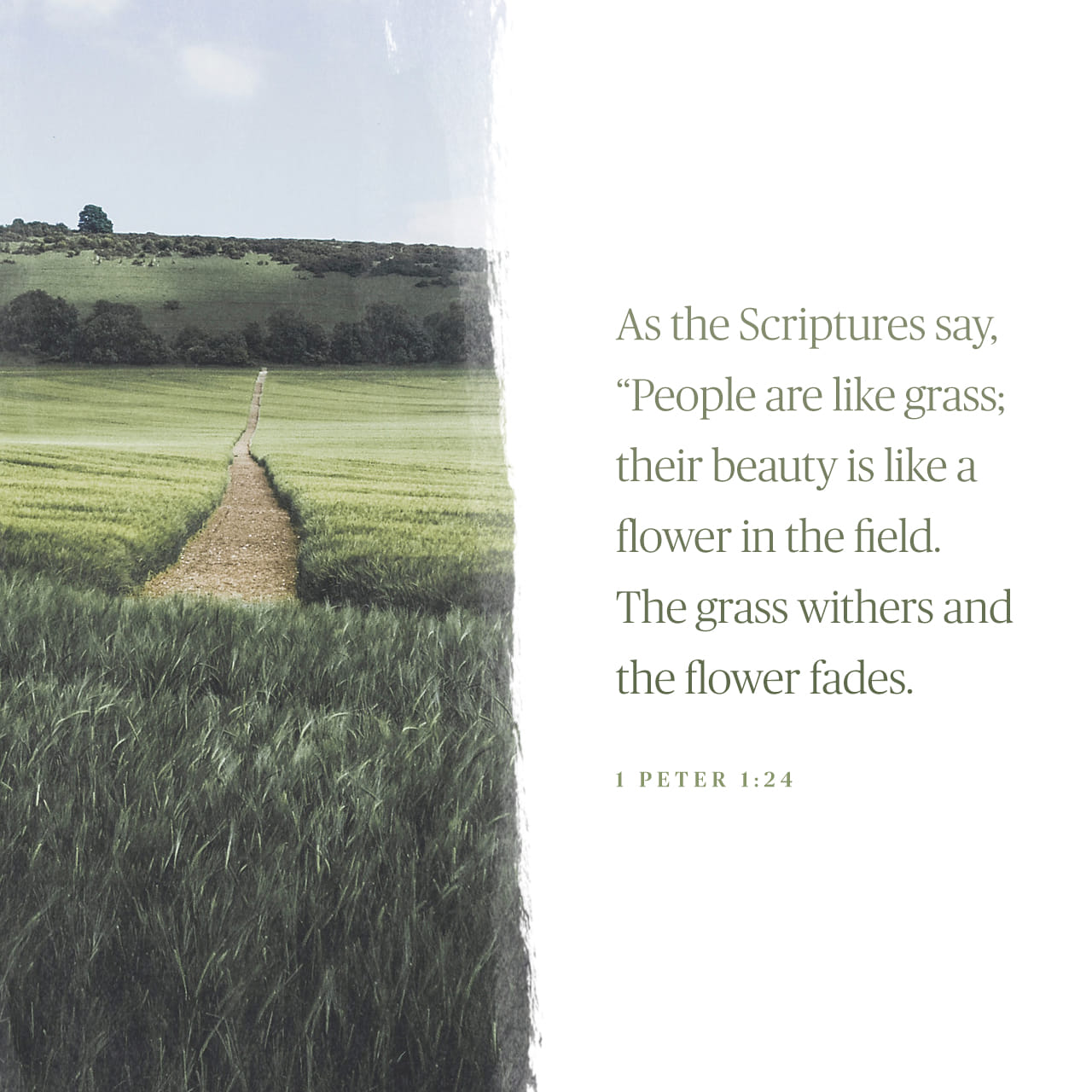 "1 Peter 1:24 For, ""All people are like grass, and all their glory is like the flowers of the field; the grass withers and the flowers fall 