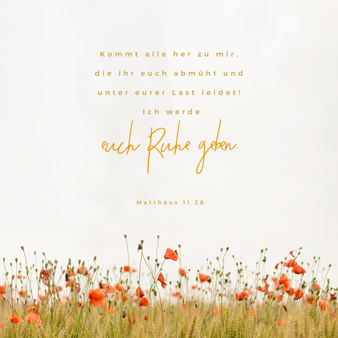 Matthäus 11:28 Kommt her zu mir alle, die ihr mühselig und