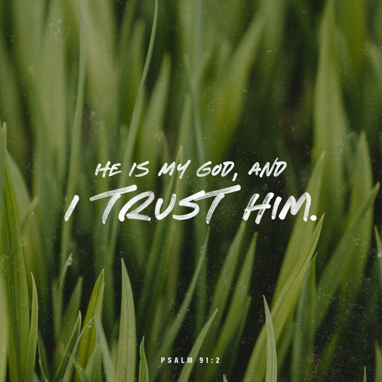 Psalms 91:2 I will say of the LORD, He is my refuge and my fortress: my God; in him will I trust. | King James Version (KJV)