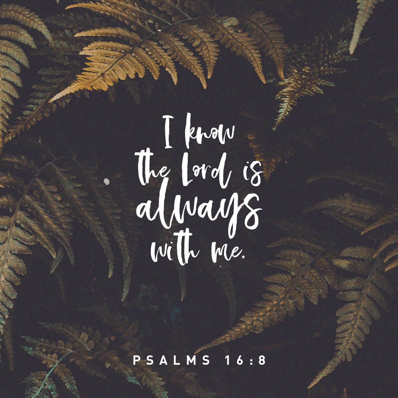 Psalms 16:8 I have set the LORD always before me: because he is at my right hand, I shall not be moved. | King James Version (KJV)