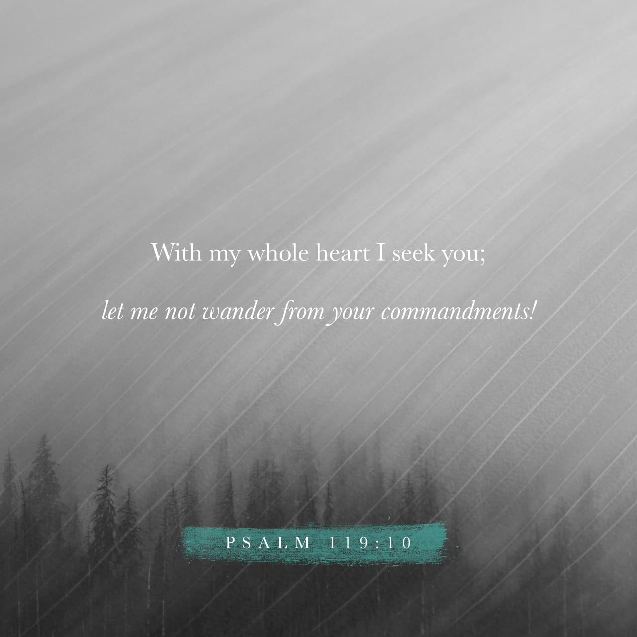 Psalm 119:10 With my whole heart have I sought You, inquiring for and of You and yearning for You; Oh, let me not wander or step aside [either in ignorance or willfully] from Your commandments. [II Chron. 15:15.]