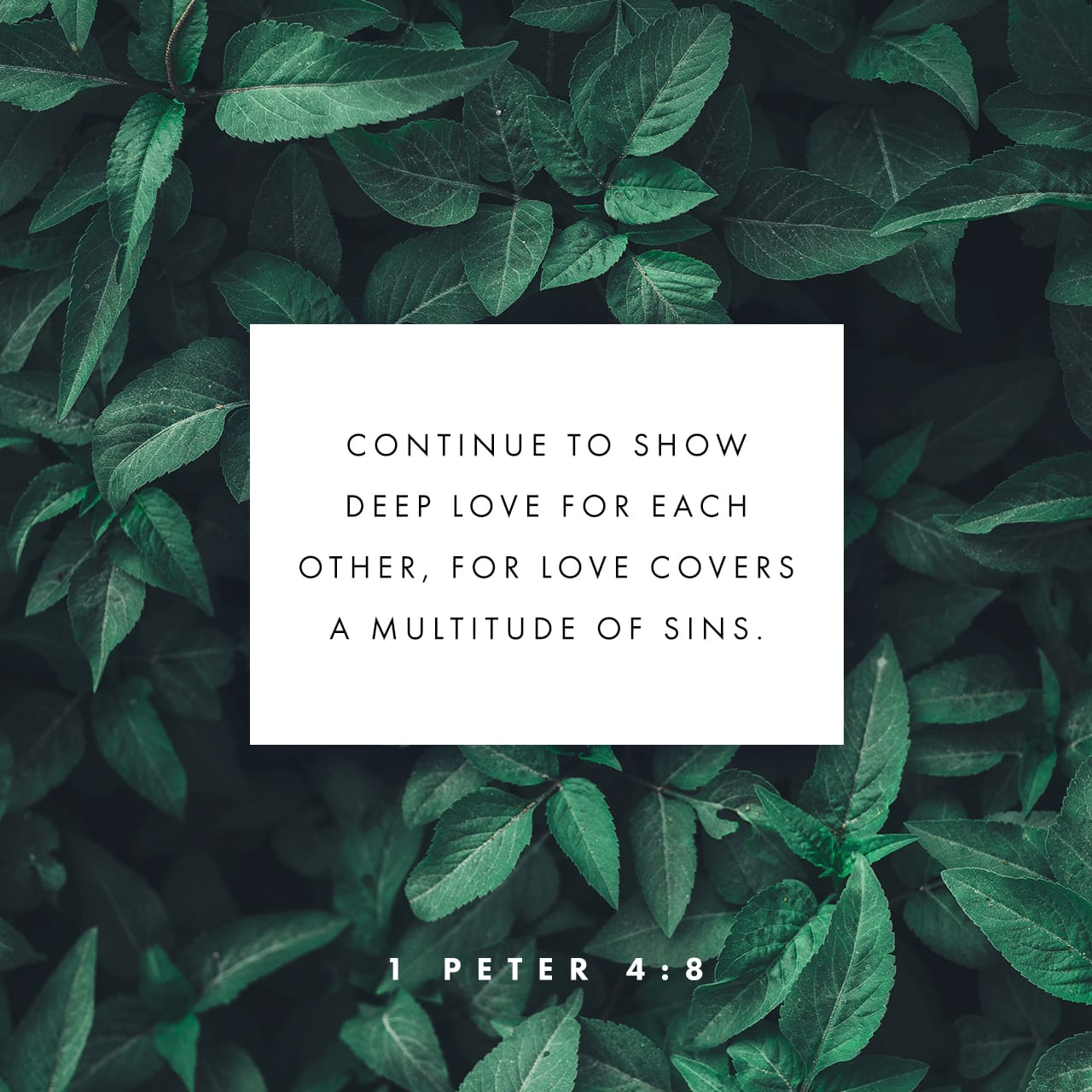 1 Peter 4:8 And above all things have fervent charity among yourselves: for charity shall cover the multitude of sins. | King James Version (KJV)