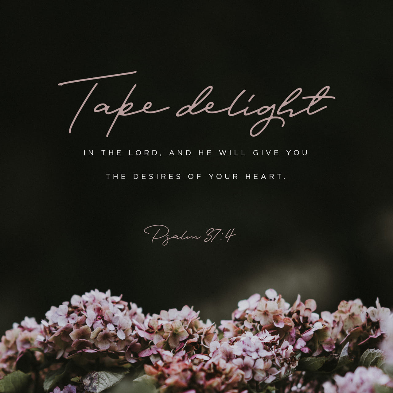 Salmos 37:4 Entrégale a Dios tu amor, y él te dará lo que más deseas. | Traducción en Lenguaje Actual (TLA)