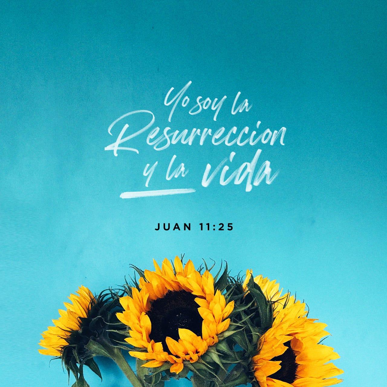 Imagen de Versículo para Juan 11:25