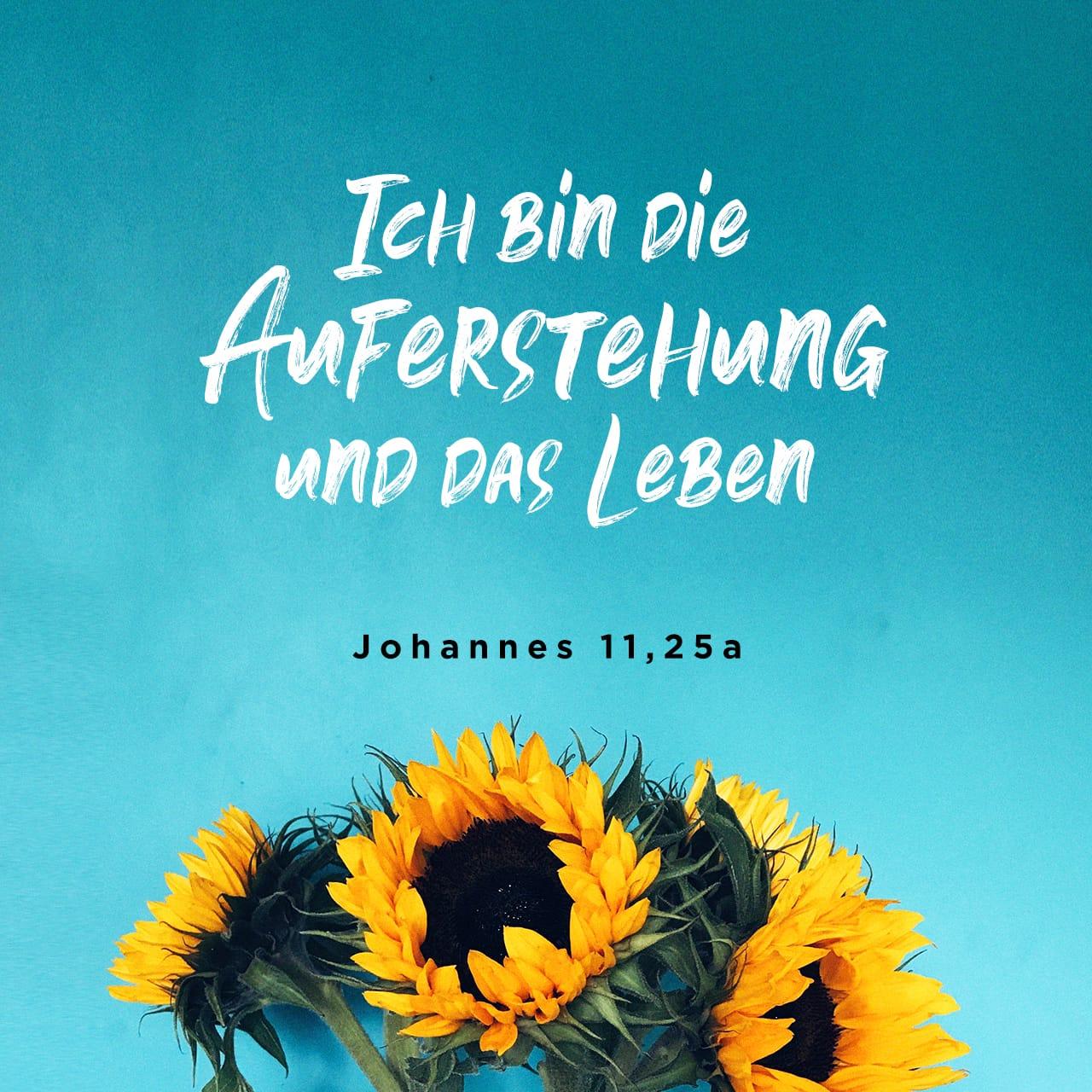 Versbild für Johannes 11,25