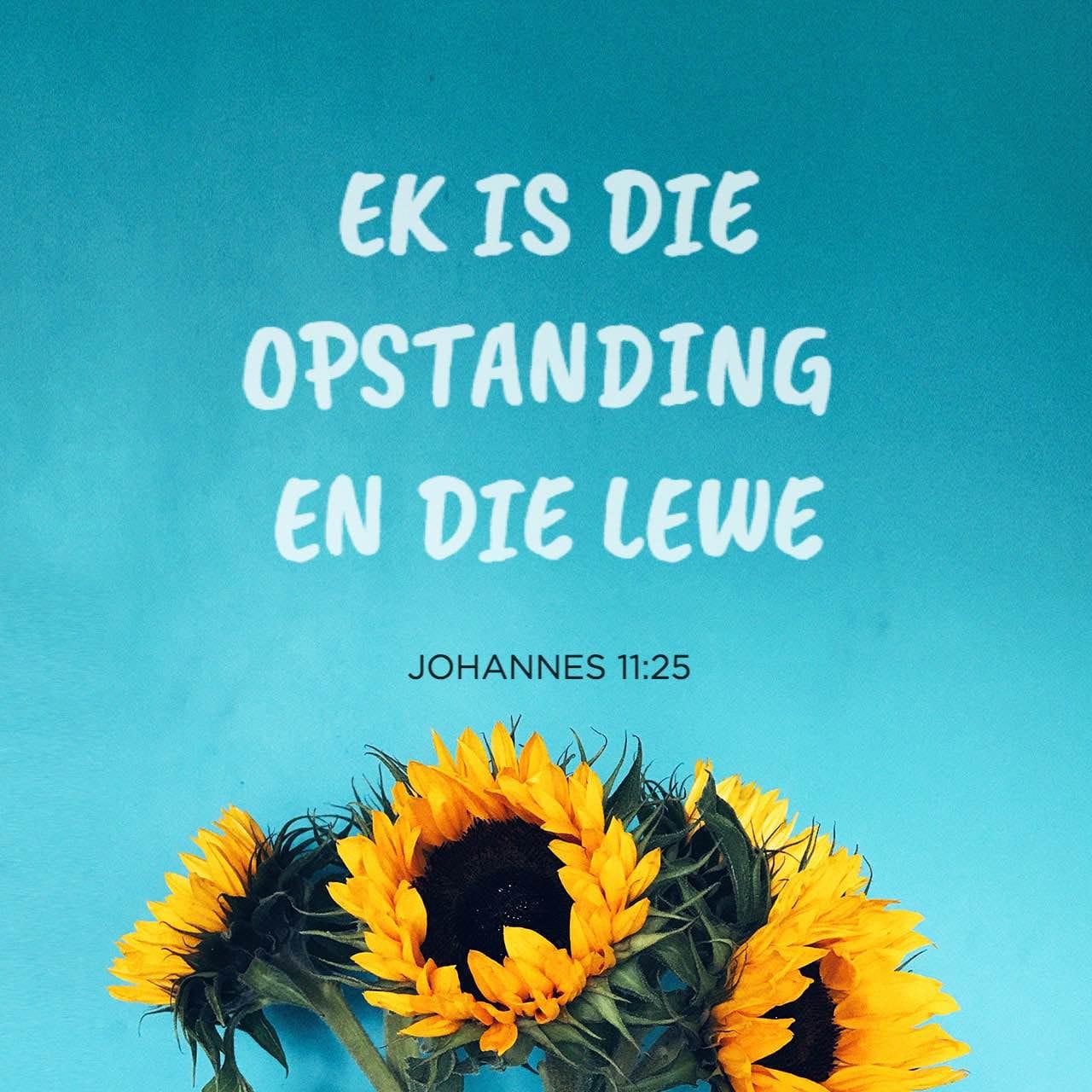 Versbeeld vir Johannes 11:25