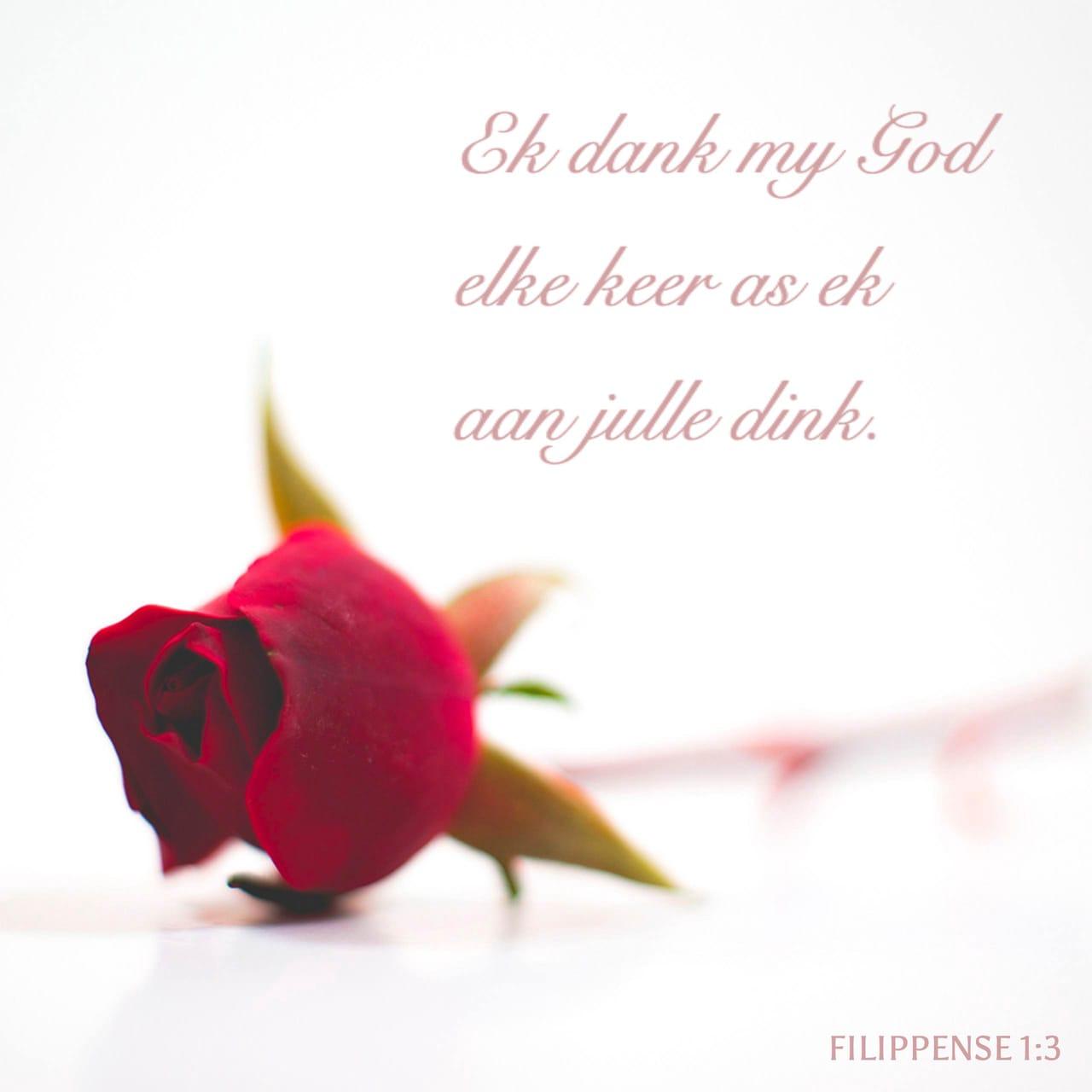Ek dank my God elke keer as ek aan julle dink. - Filippense 1:3 - Versbeeld
