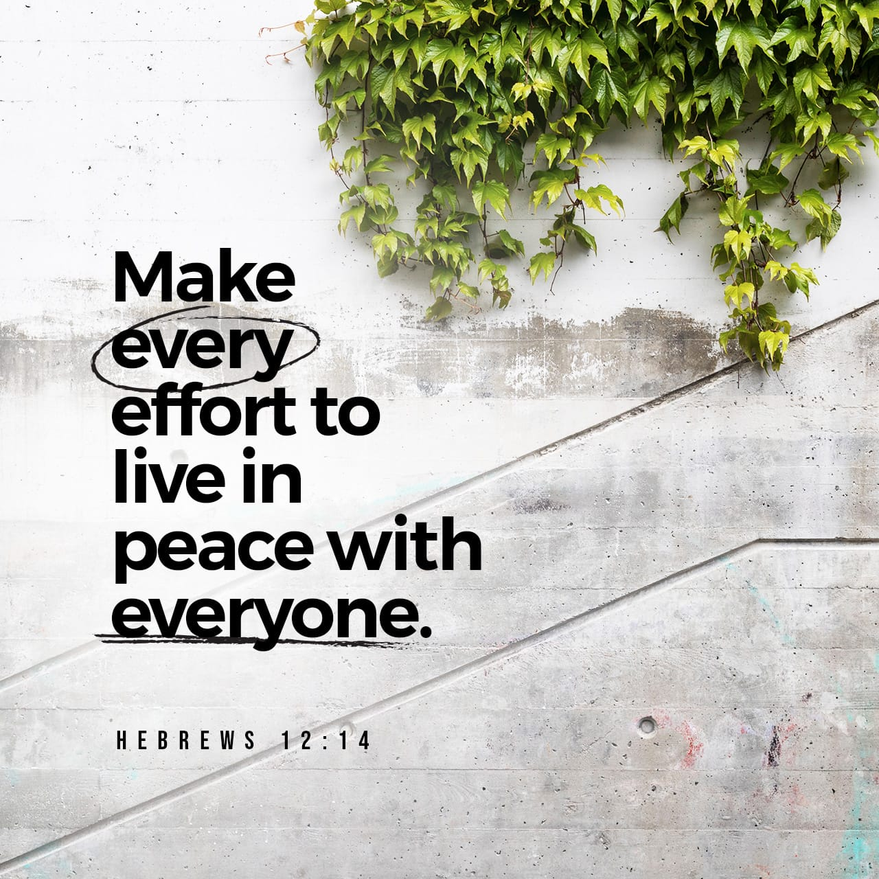 Hebrews 12:14 Follow after peace with all men, and the