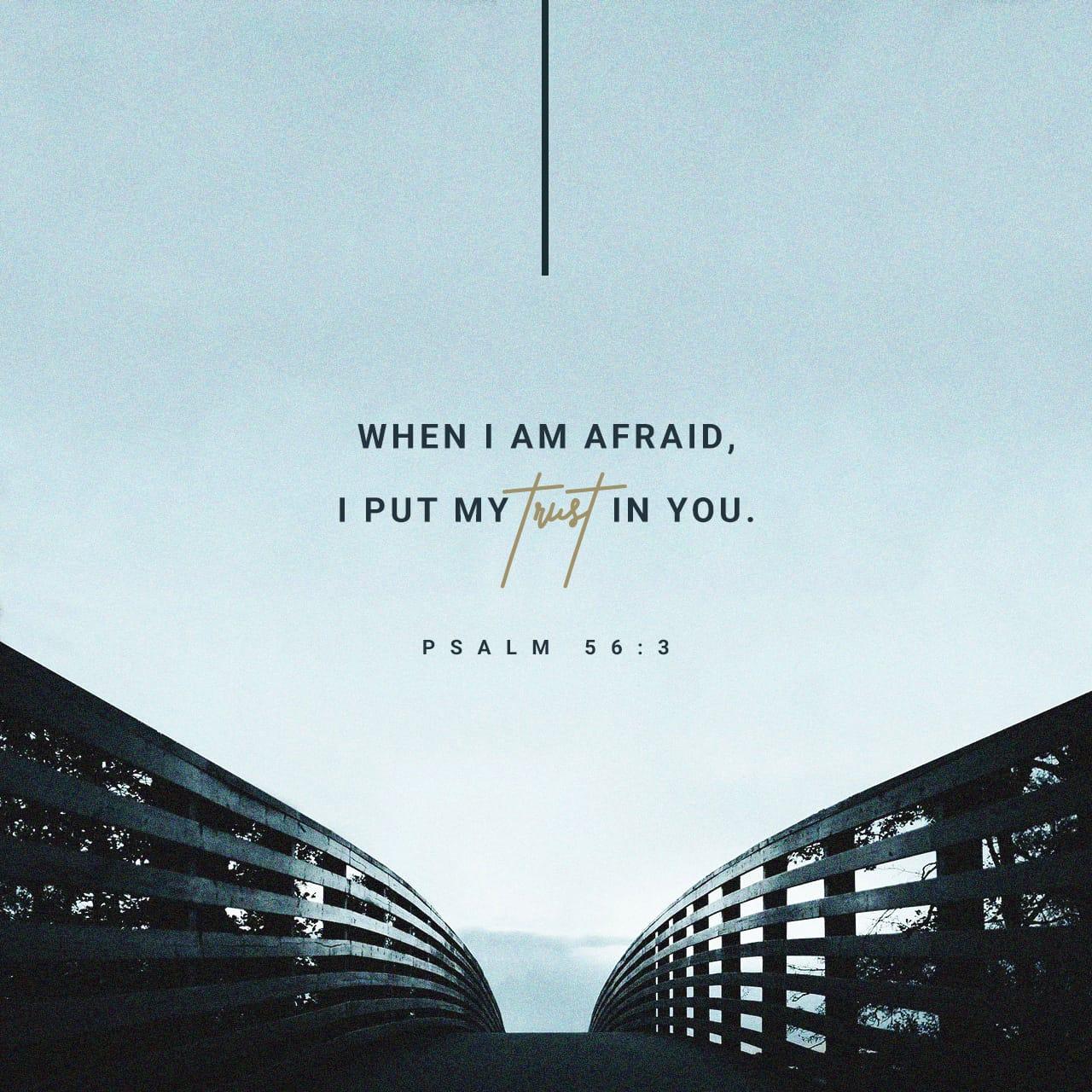 Verse of the Day - Zephaniah 3:17 (KJV) | The Bible App