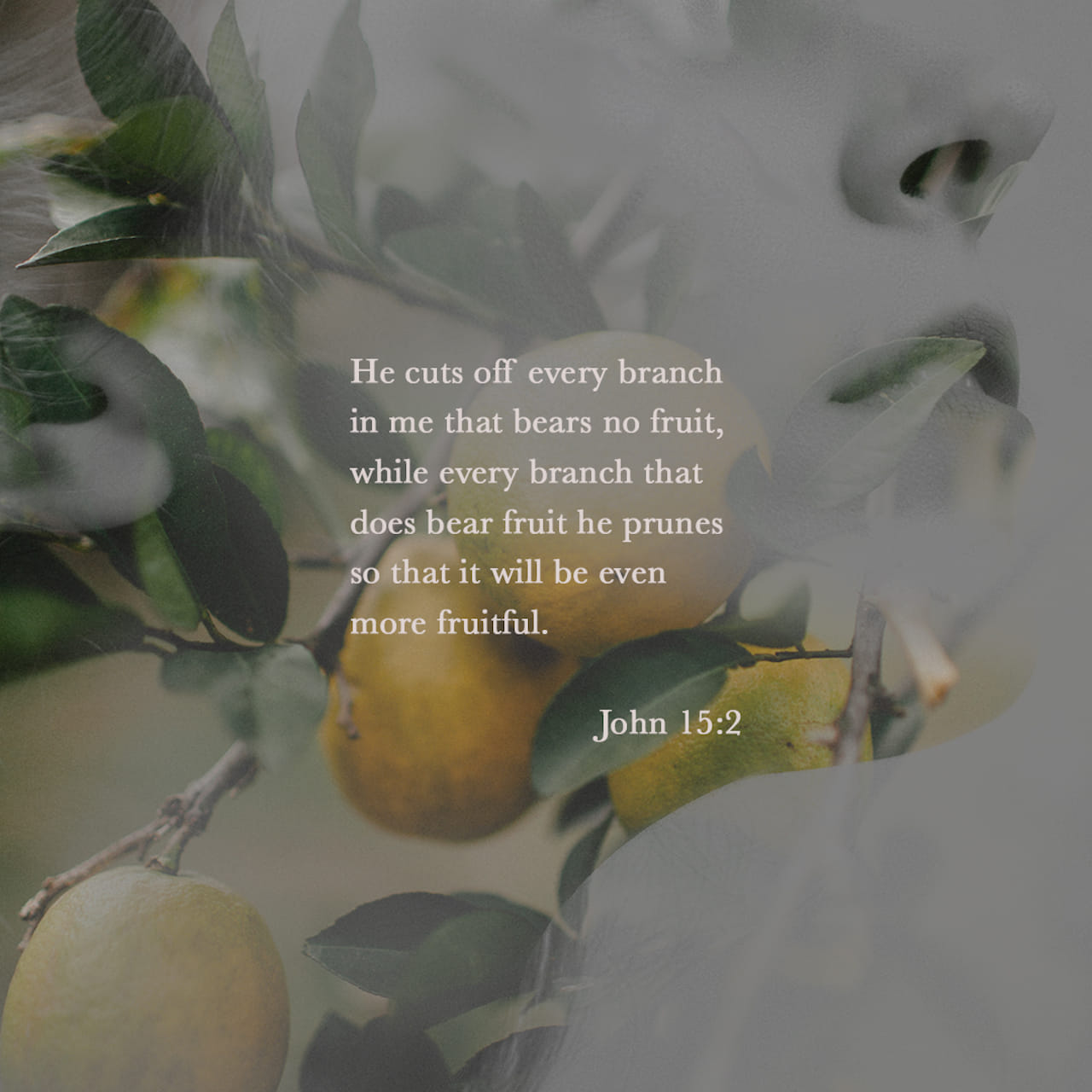 He cuts off every branch in me that bears no fruit, while every branch that does bear fruit he prunes so that it will be even more fruitful. - John 15:2 - Verse Image