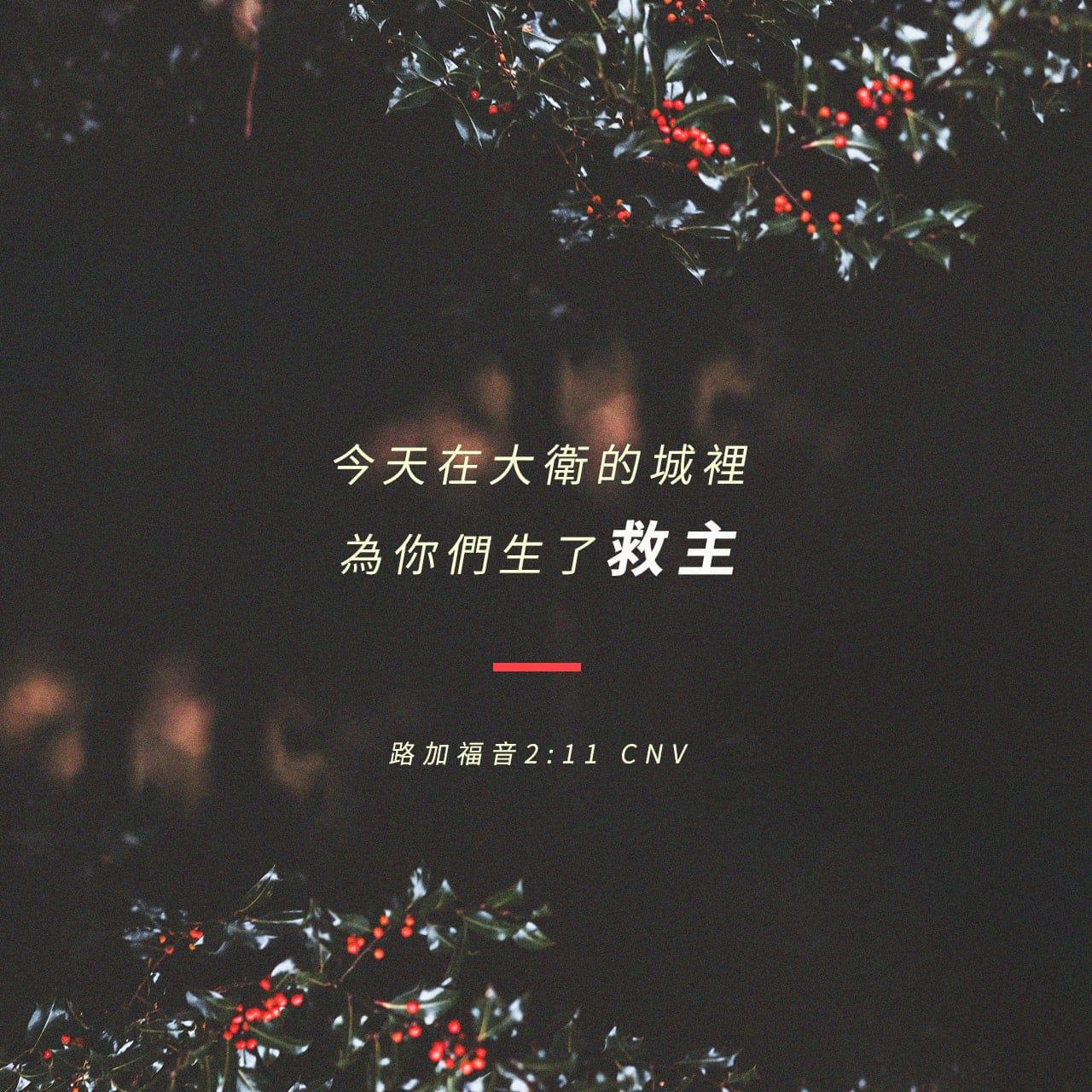 因今天在大衛的城裏,為你們生了救主,就是主基督。——路加福音 2:11——經文圖