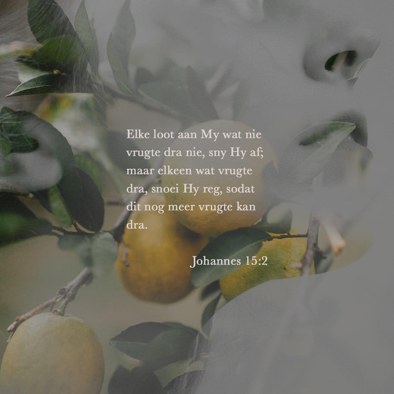Elke loot aan My wat nie vrugte dra nie, sny Hy af; maar elkeen wat vrugte dra, snoei Hy reg, sodat dit nog meer vrugte kan dra. - Johannes 15:2 - Versbeeld