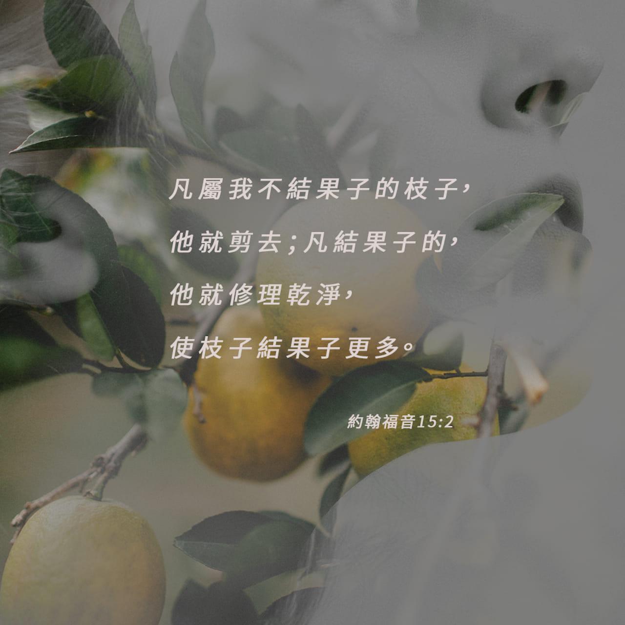 凡屬我不結果子的枝子,他就剪去;凡結果子的,他就修理乾淨,使枝子結果子更多。——約翰福音 15:2 ——經文圖