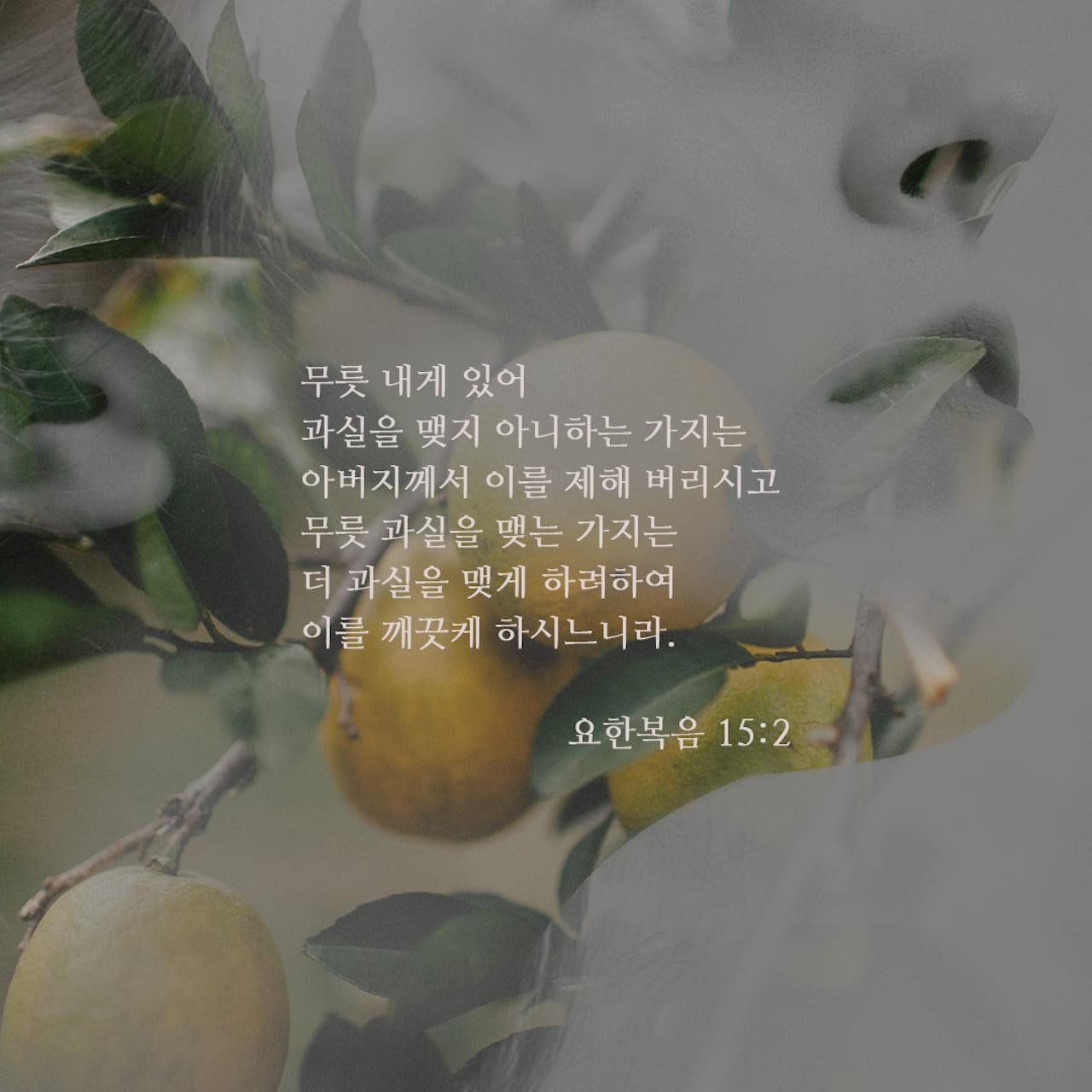 아버지께서 열매가 맺히지 않는 내 모든 가지를 잘라내시고, 열매를 맺는 가지마다 더 많은 열매를 맺게 하시려고 가지를 깨끗게 하신다.