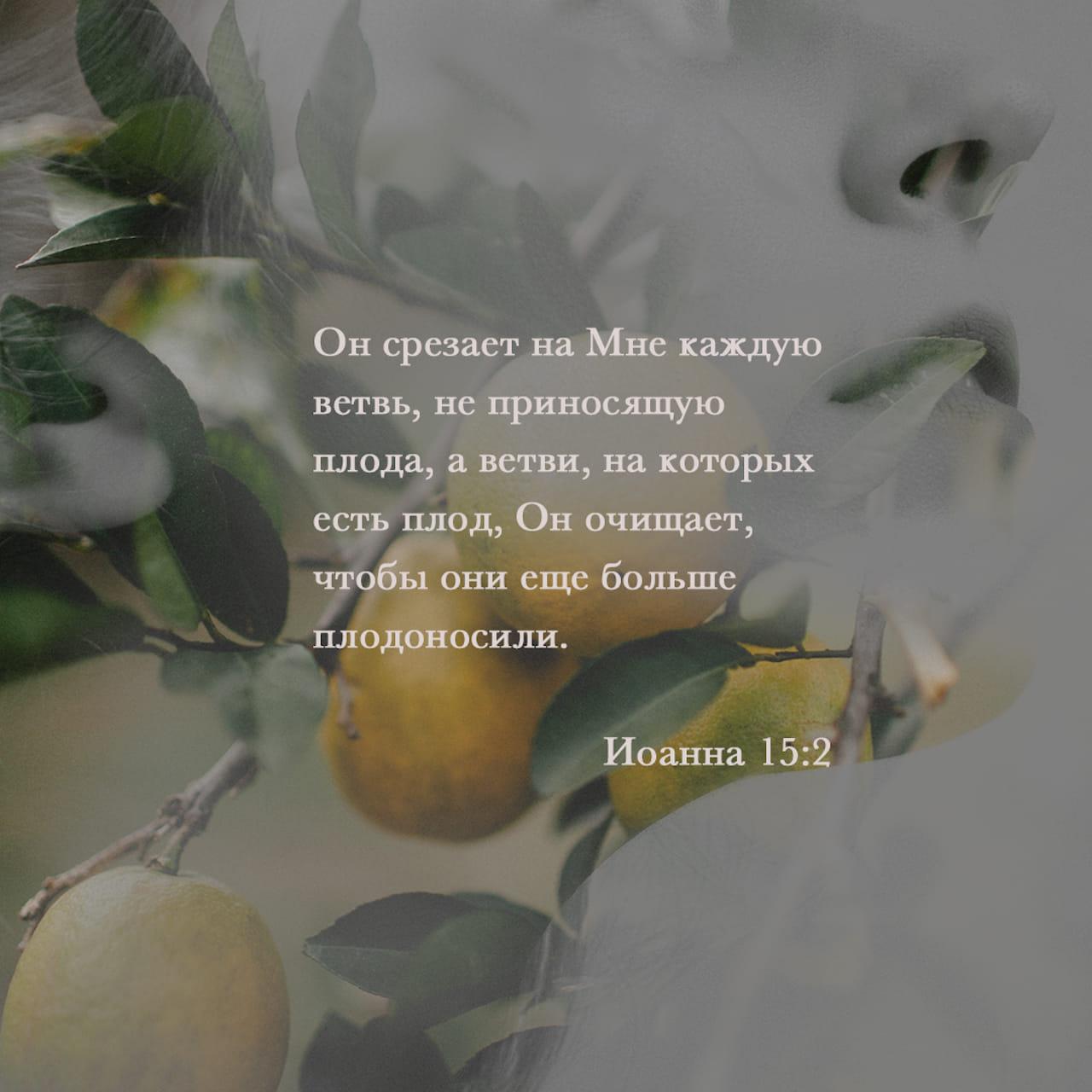 Всякую у Меня ветвь, не приносящую плода, Он отсекает; и всякую, приносящую плод, очищает, чтобы более принесла плода. - Иоанна 15:2 - фото-стих