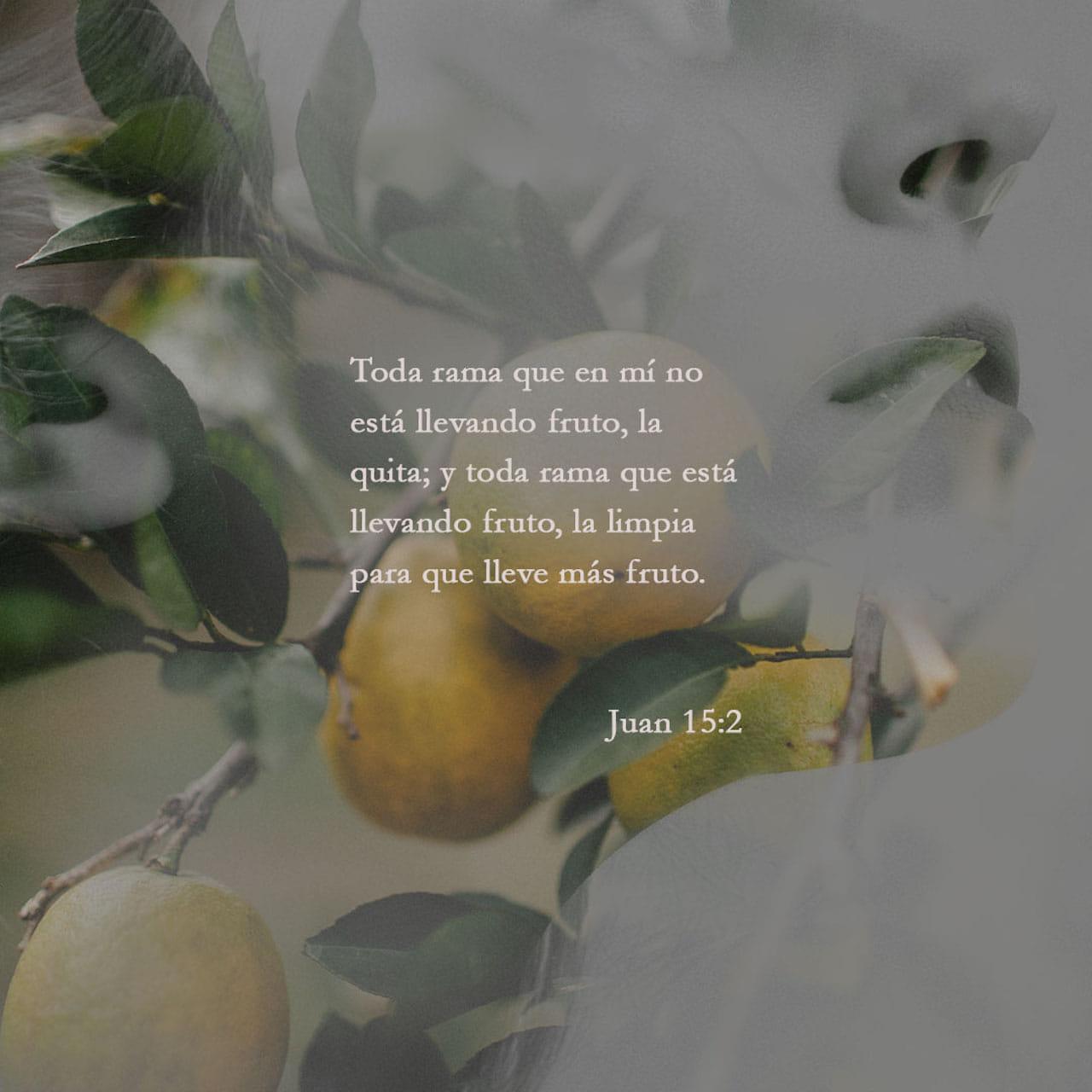 Toda rama que en mí no da fruto, la corta; pero toda rama que da fruto la poda para que dé más fruto todavía.