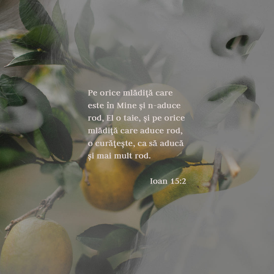 El taie din Mine orice mlădiță care nu aduce rod și curăță orice mlădiță care aduce rod, ca să aducă și mai mult rod. - Ioan 15:2 - Verset ilustrat
