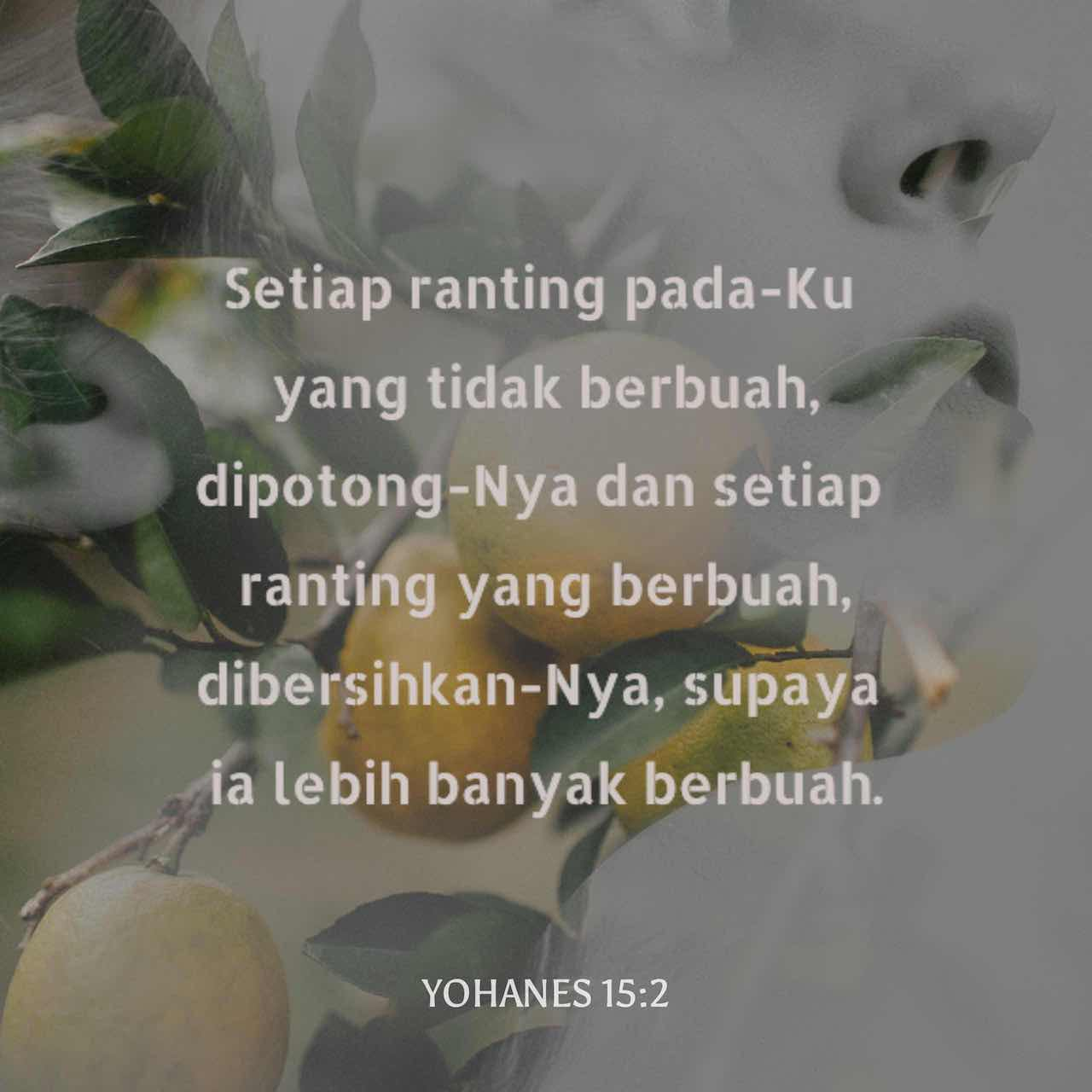 Dia memotong setiap cabang di dalam diri saya yang tidak menghasilkan buah, sedangkan setiap cabang yang menghasilkan buah dipangkas-Nya sehingga akan berbuah lebih banyak. - Yohanes 15:2 - Gambar Ayat