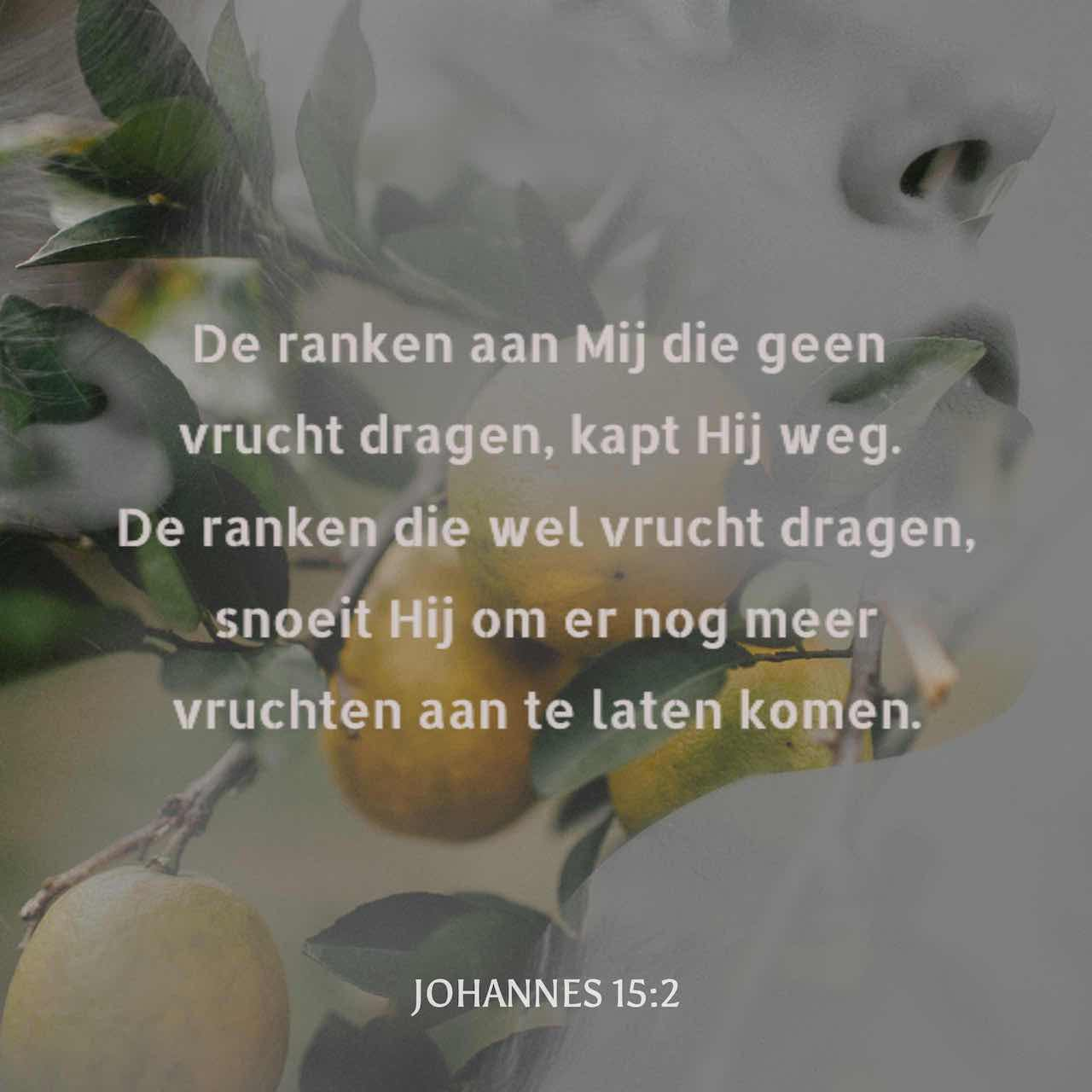 De ranken aan Mij die geen vrucht dragen, kapt Hij weg. De ranken die wel vrucht dragen, snoeit Hij om er nog meer vruchten aan te laten komen. - Johannes 15:2 - Versafbeelding