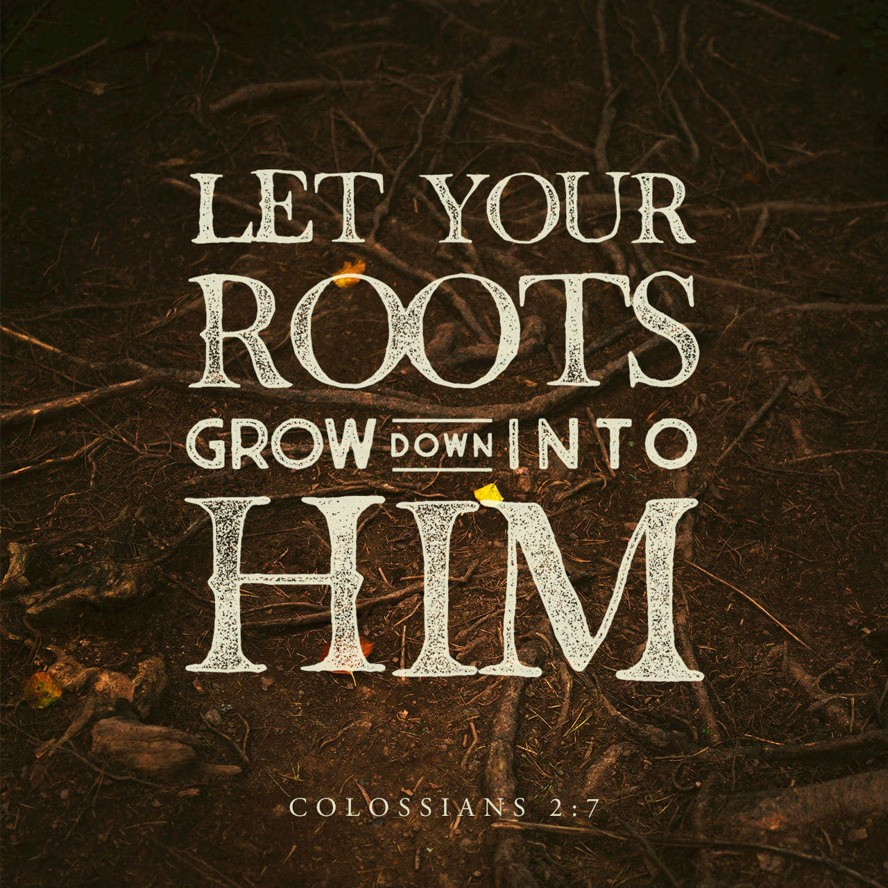 Colossians 2:7 Rooted and built up in him, and stablished in the faith, as ye have been taught, abounding therein with thanksgiving. | King James Version (KJV)