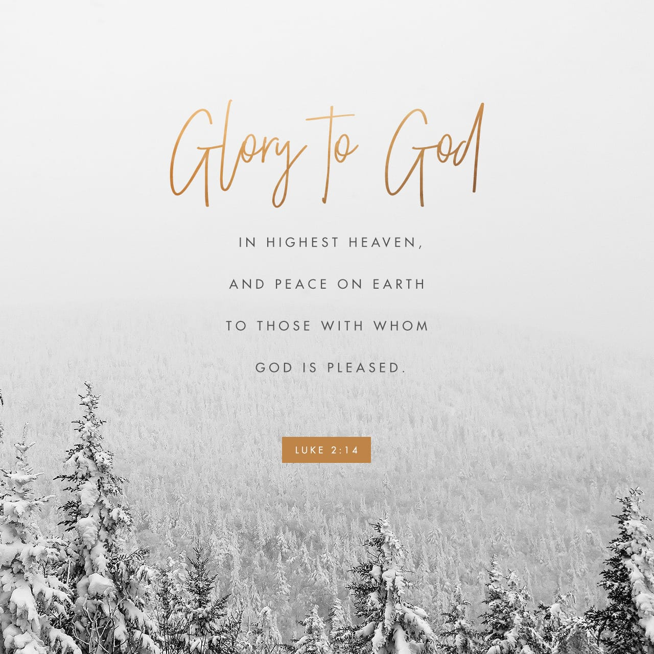 Luke 2:6-14 And while they were there, the time came for her baby to be born. She gave birth to her firstborn son. She wrapped him snugly in strips of cloth and laid him in a manger, because there was no lodging | New Living Translation (NLT)