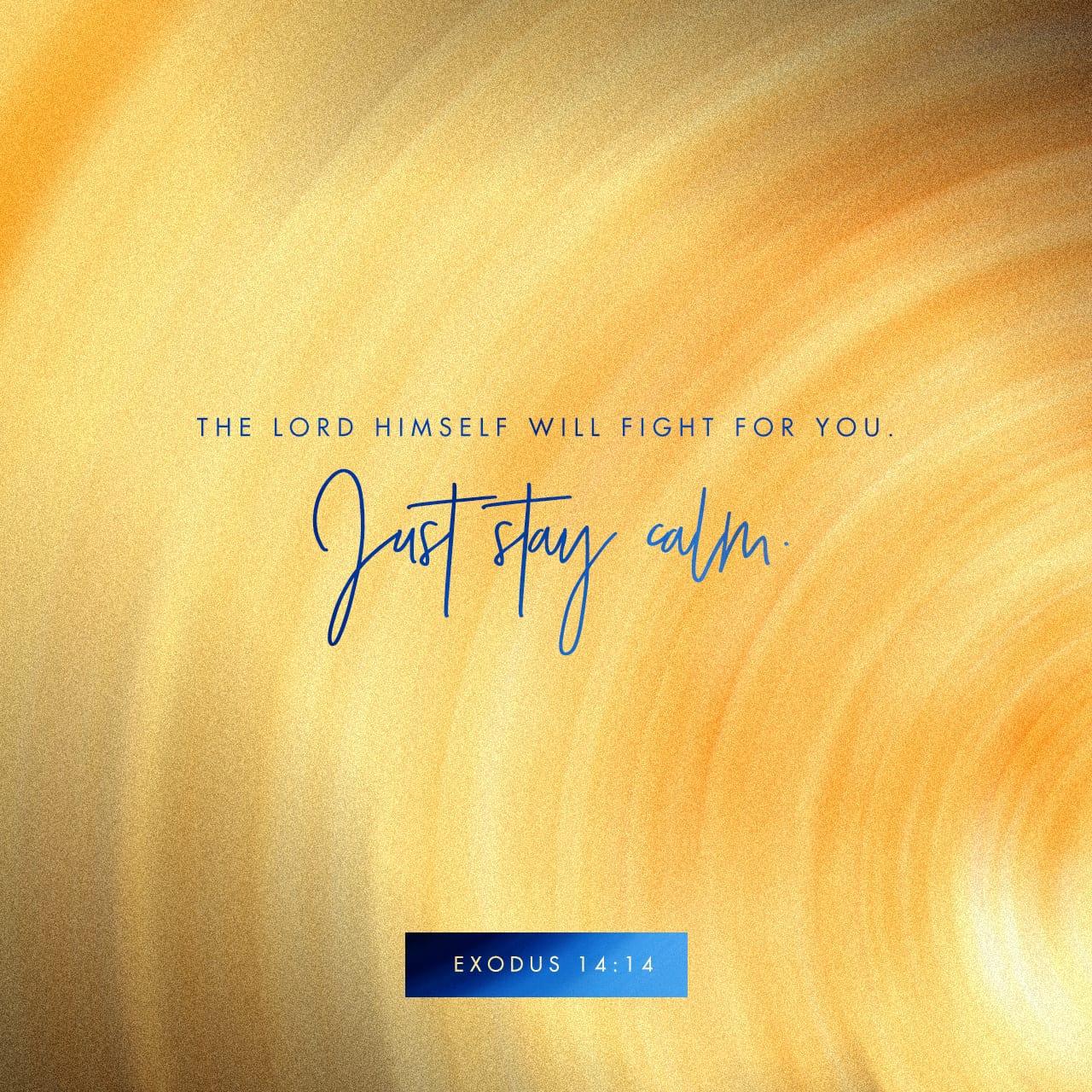Éxodo 14:14 Jehová peleará por vosotros, y vosotros estaréis tranquilos. | Biblia Reina Valera 1960 (RVR1960)