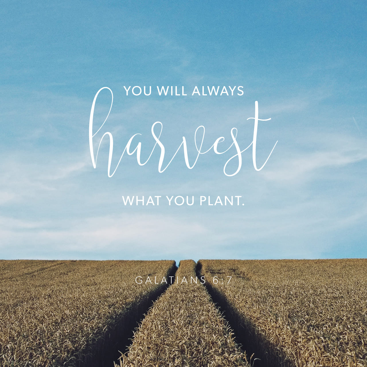 Galatians 6:7-8 Be not deceived; God is not mocked: for whatsoever a man soweth, that shall he also reap. For he that soweth to his flesh shall of the flesh reap corruption; but he that soweth to the Spirit shall of | King James Version (KJV)