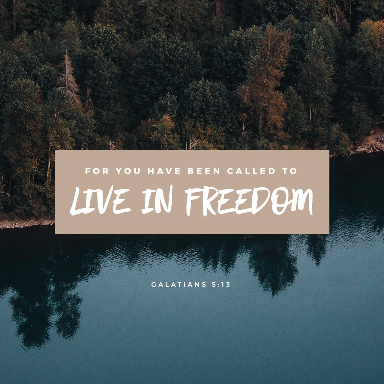 Lettera ai Galati 5:13 Perché, fratelli, voi siete stati chiamati a libertà; soltanto non fate della libertà un'occasione per vivere secondo la carne, ma per mezzo dell'amore servite gli uni agli altri | Nuova Riveduta 1994 (NR94)