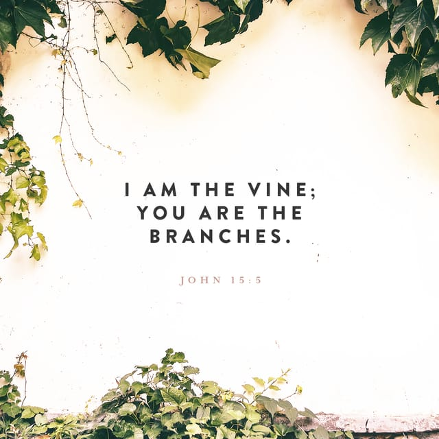 """John 15:5 NIV; """"I Am The Vine; You Are The Branches. If"""